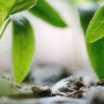 A franciák döntöttek: több nagyvárosban betiltják a növényvédőszerek használatát