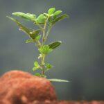 Növénytermesztésre lehet alkalmas a Hold és a Mars talaja