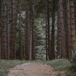 Az erdőirtások is hatnak az éghajlatváltozásra, de nem olyan drasztikusan, mint azt gondolták