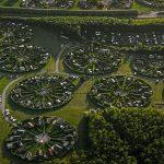 Különleges kiskerteket bérelhet a lakosság Koppenhága külvárosában