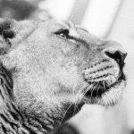 Európai díjra jelölik a budapesti állatkert hulladékcsökkentési programját