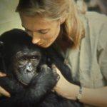 Úgy akart élni, mint Tarzan – Ma ünnepli születésnapját Jane Goodall