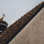 Így segítenek a gólyafiókákon a szakemberek, ha a szülő madár megsérül