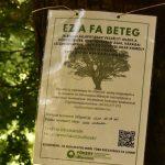 """""""Ez a fa beteg"""" – 12 darab fát kell kivágni a Vérmezőn"""