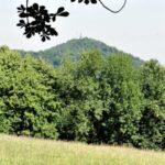 Veszélyben Budapest utolsó idős erdői – a Normafára tervezett lombkoronasétány jelentős károkat okozhat