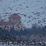 A tatai luxusszálloda-beruházás veszélyezteti az Öreg-tó kivételes madárvilágát is