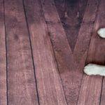 Új megközelítésben vizsgálják a kutyák játékosságát magyar és svéd etológusok